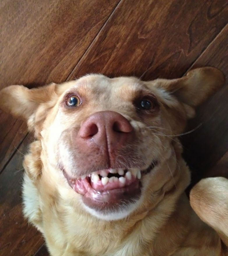 64. животное, улыбка