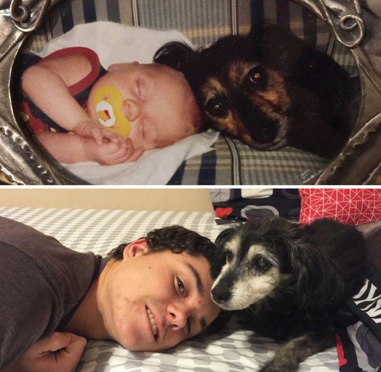 15 лет: лучшие друзья до и после, друзья, собаки, фото
