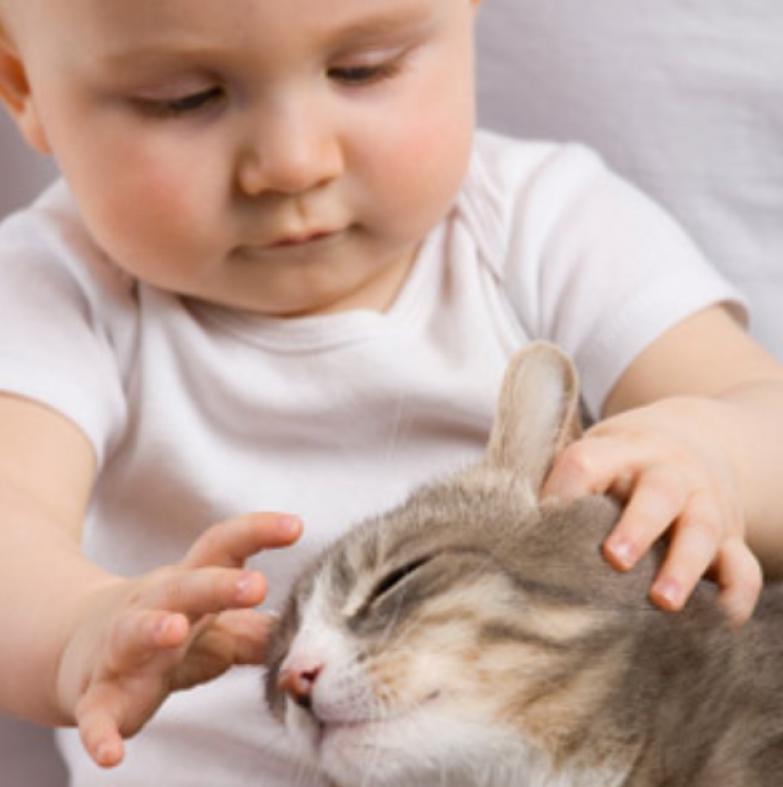 9. Нежные прикосновения кот, малыш, очарование