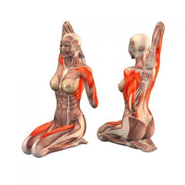 Комплекс упражнений на растяжку мышц