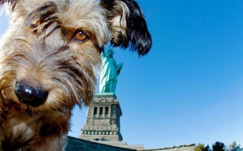 Оскар на фоне статуи свободы