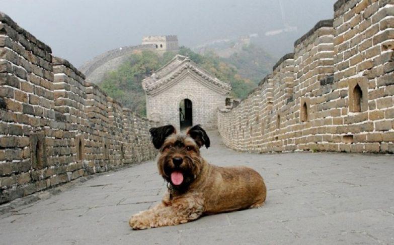 Оскар на великой китайской стене