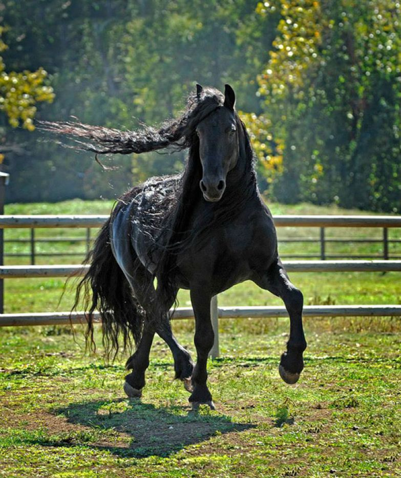 Супер-фотогеничный конь.