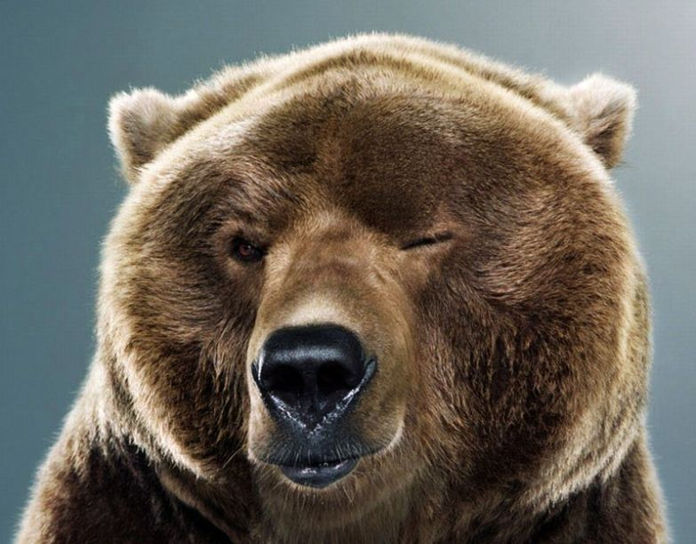 Медведи 4