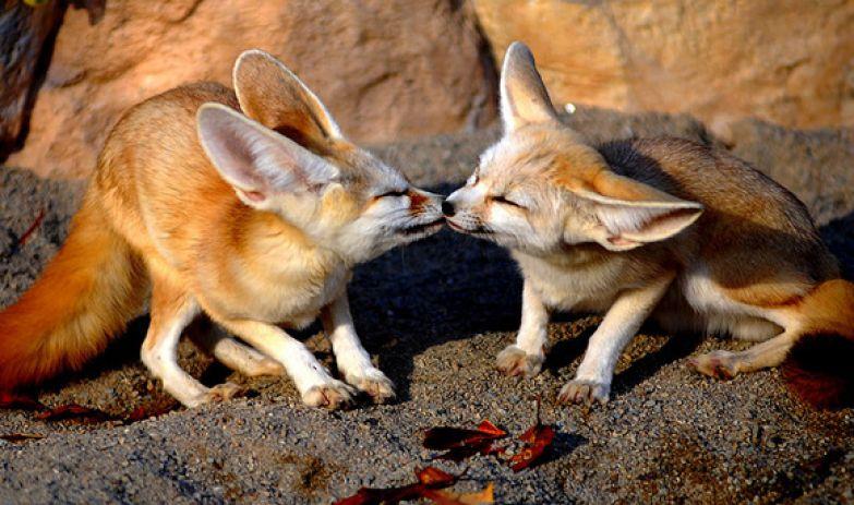 Любовь животных 6
