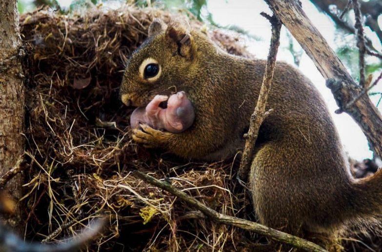 Мама-белка и ее бельчонок в мире, кадр, фотограф