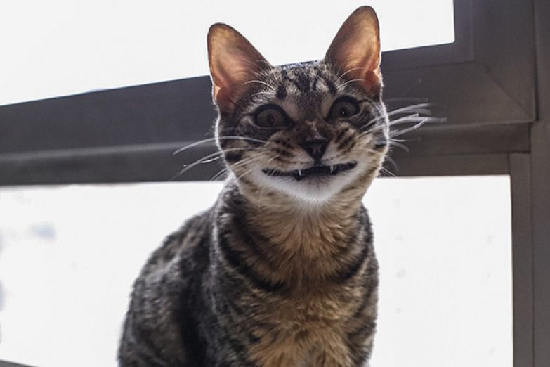 72. животное, улыбка