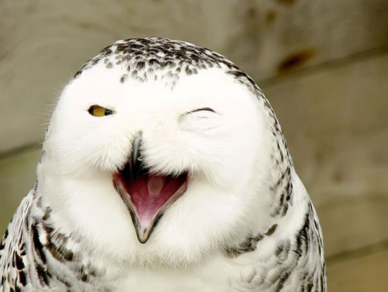 9. животное, улыбка