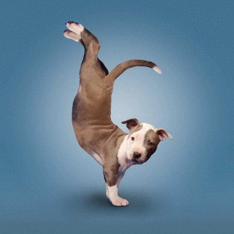 Животные  йога 2