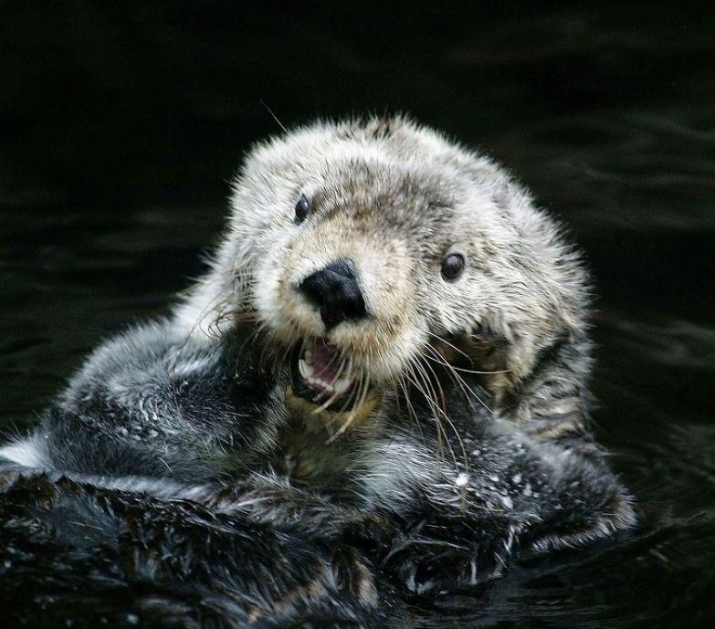 8 немного жутких фактов о животных, которых все привыкли считать милашками