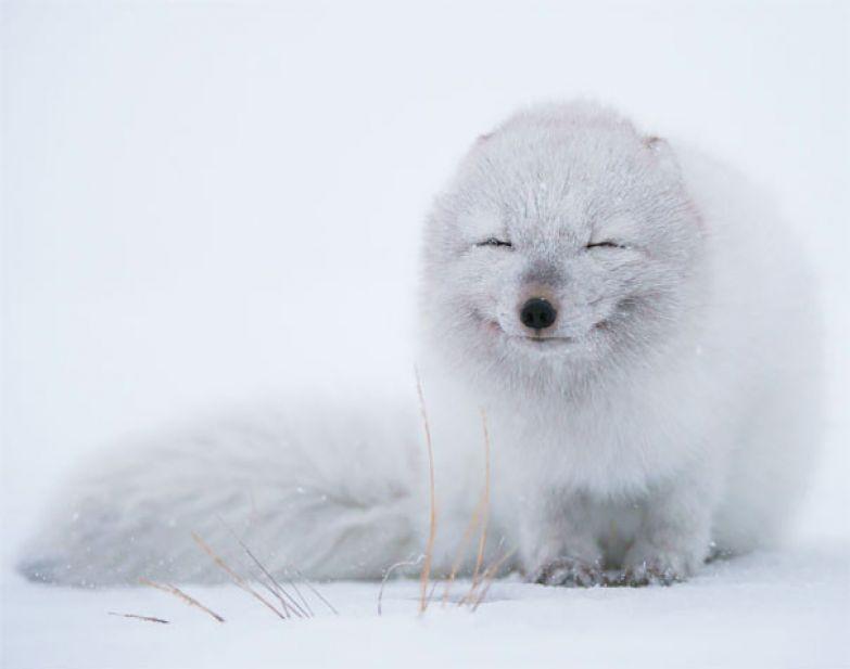 25. животное, улыбка