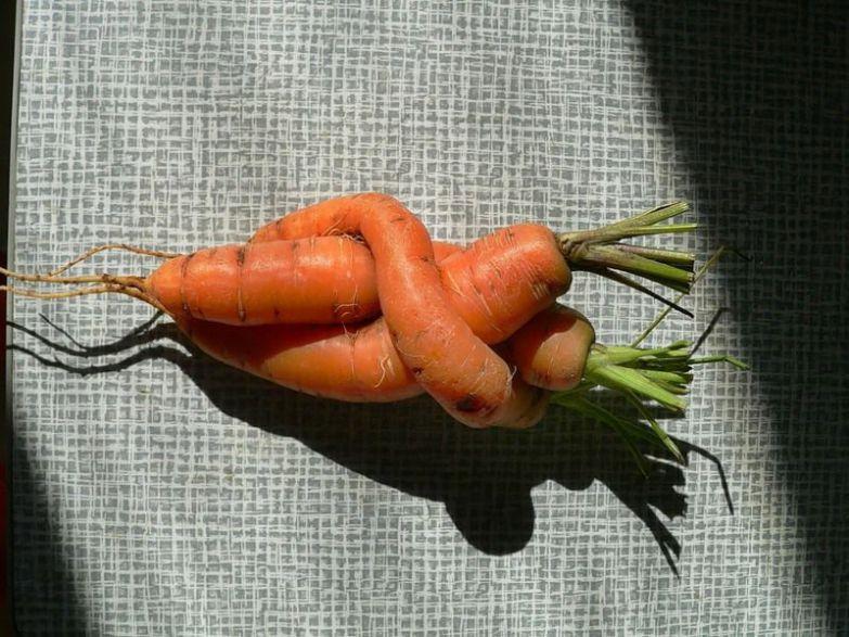 Любовь морковь 2