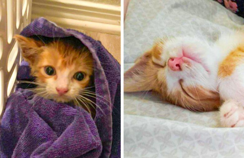 20+ животных, которые попали в добрые руки и стали по-настоящему счастливыми