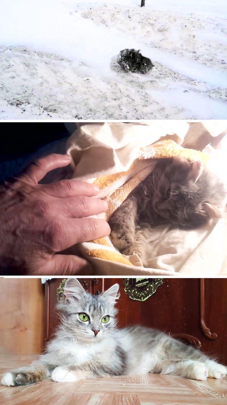 Как изменились брошенные котята, когда стали нужными и обрели новую жизнь