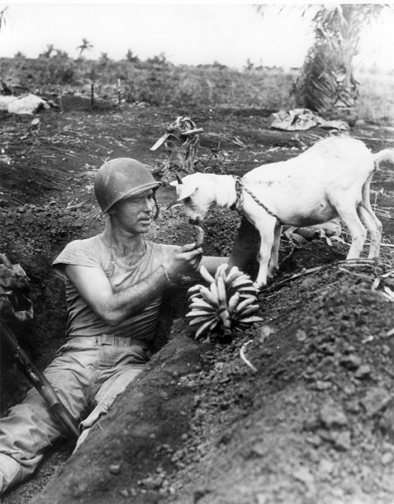 20. Солдат угощает козла бананом. Битва за Сайпан, 1944 г. архивные фотографии, лучшие фото, ретрофото, черно-белые снимки
