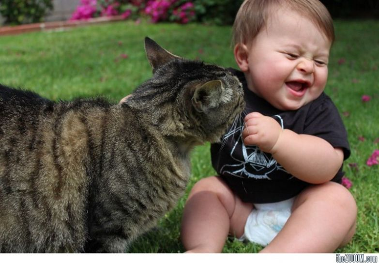 8. Защекотал кот, малыш, очарование