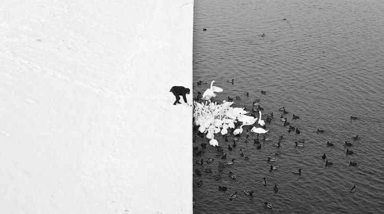 Кормление лебедей в зимний день искусство, мастерство, фото