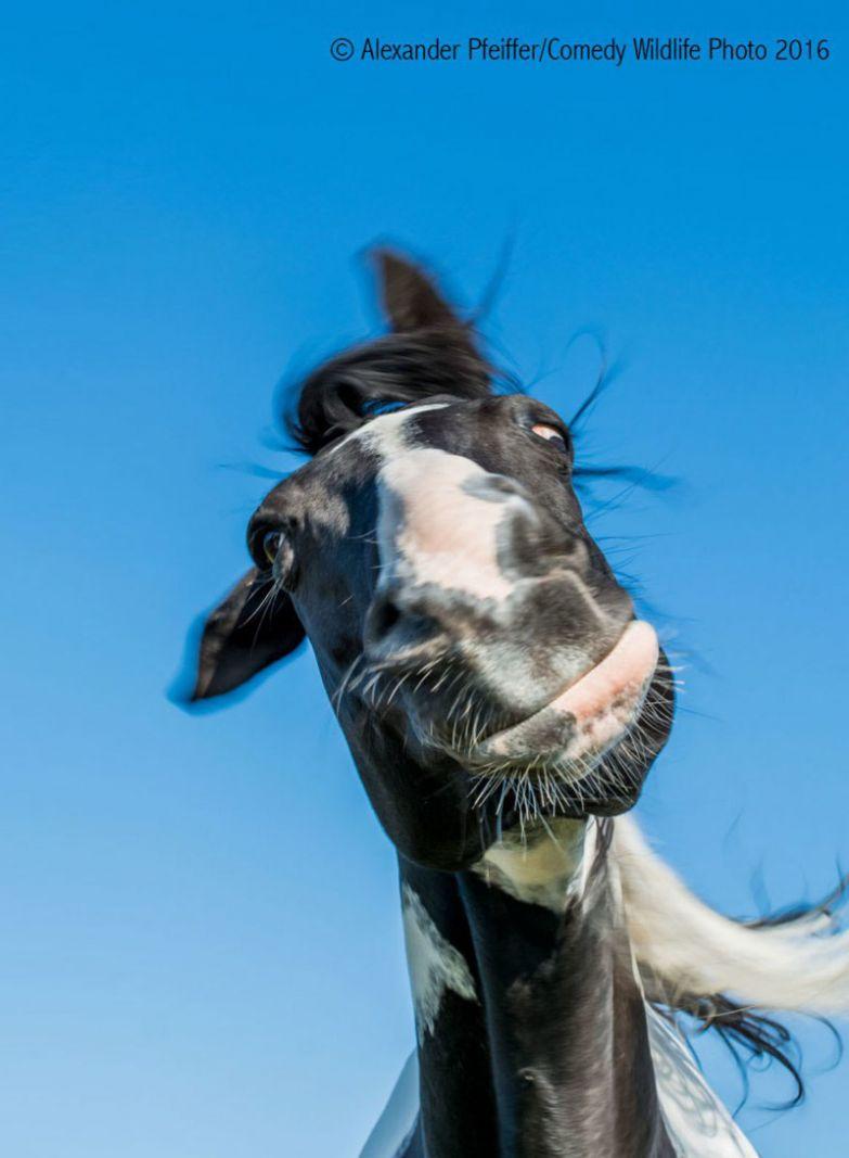 31. животные, конкурс, смех