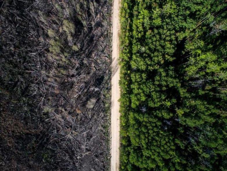Дорога, остановившая лесной пожар искусство, мастерство, фото