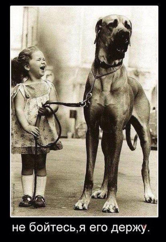 Девочка, собака