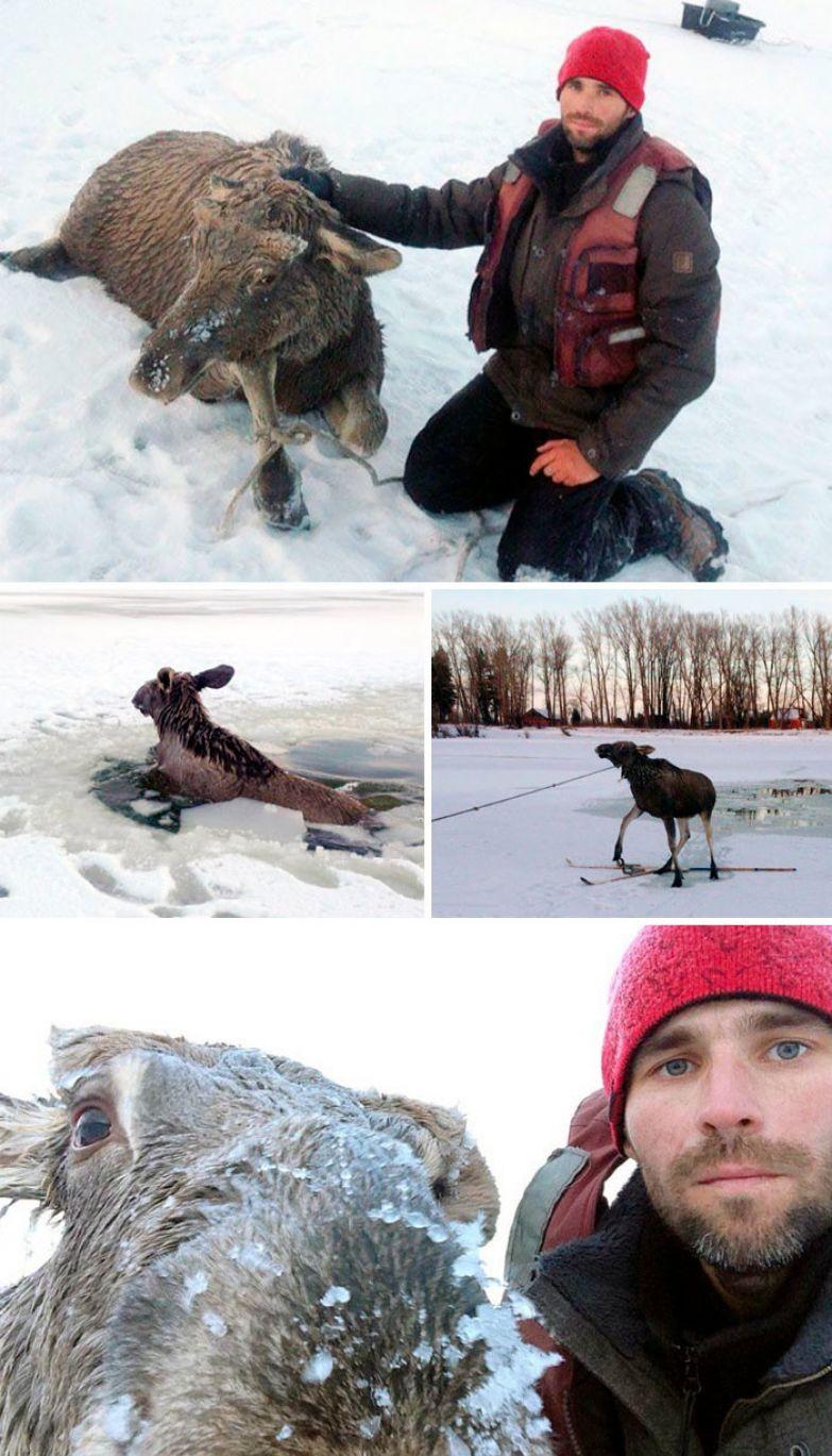 48. Барнаульский рыбак спас лося, провалившегося под лед доброта, мир, поступок