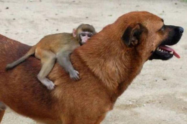 Любовь животных 28