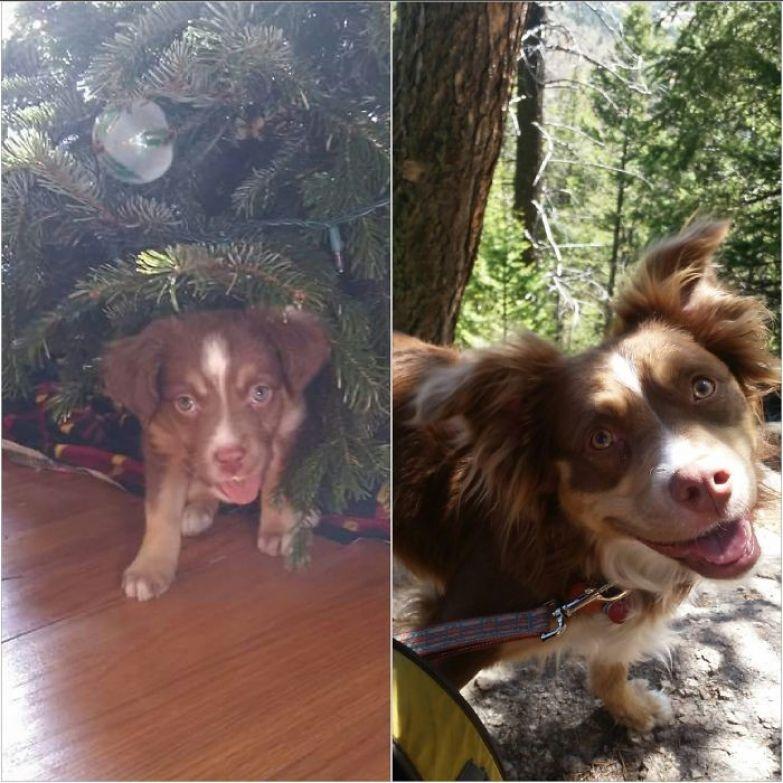 10 недель - и 2,5 года до и после, животные, любимцы, мило, питомцы, собаки, трогательно, фото
