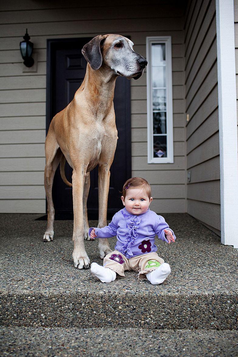 Крупные собаки и дети 16