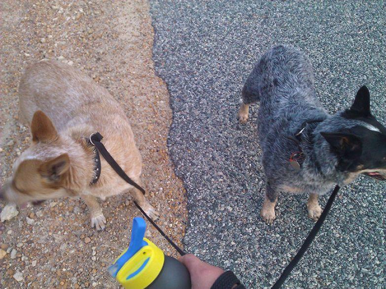 Прогулка с собаками искусство, мастерство, фото