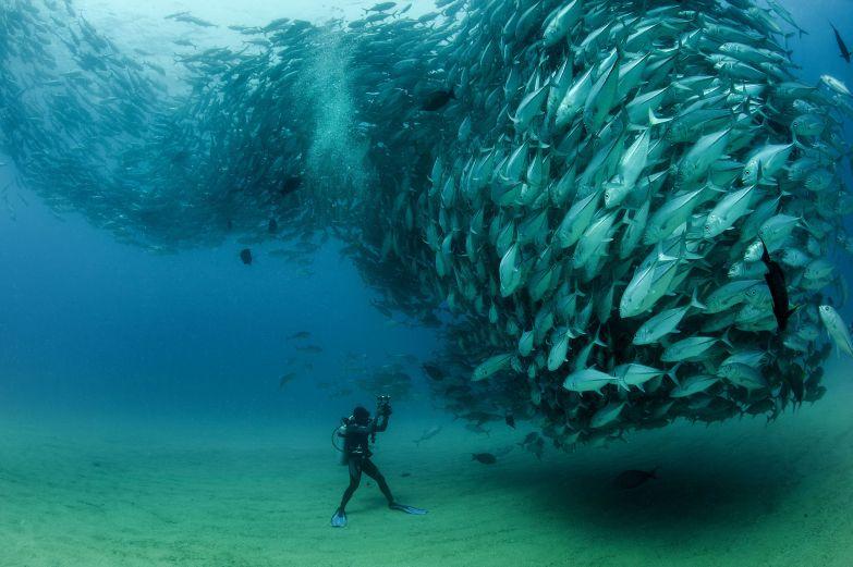 Косяк рыб и отважный дайвер Октавио Абурто в мире, кадр, фотограф