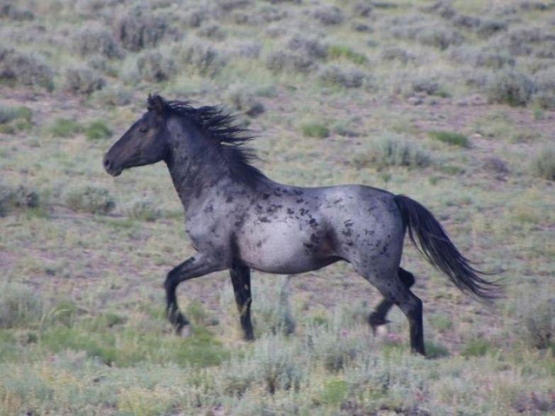 Самая необычная и интересная масть лошади.