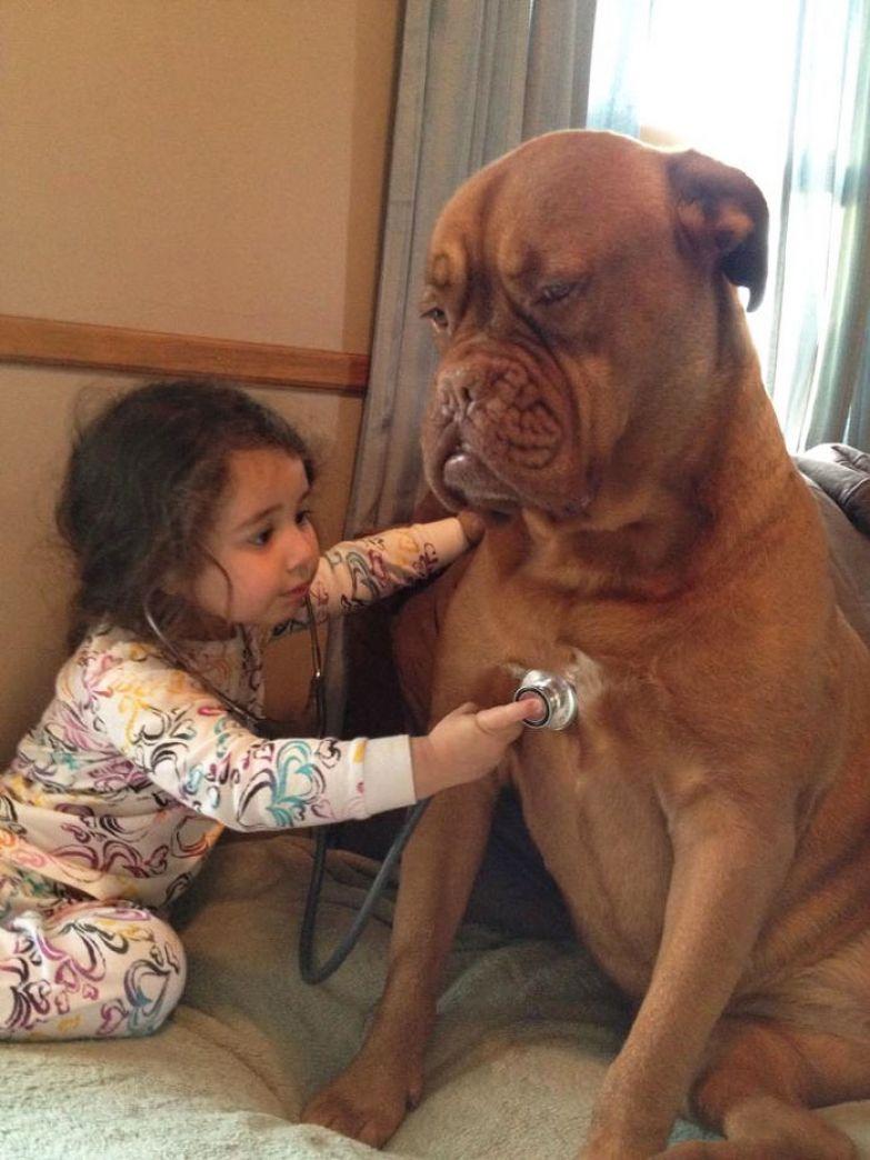 Крупные собаки и дети 7