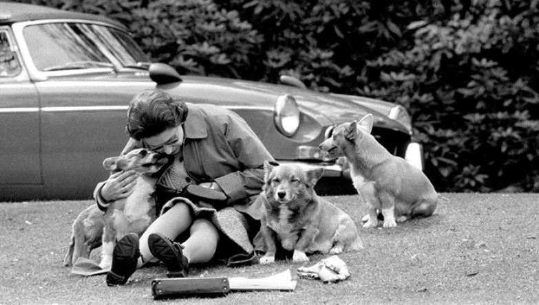 35. Королева Елизавета со своими любимцами корги, 1973 г. архивные фотографии, лучшие фото, ретрофото, черно-белые снимки