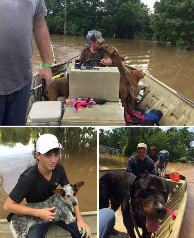 7. Отец с сыном спасли 30 собак во время наводнения в Бразории, штат Техас доброта, мир, поступок