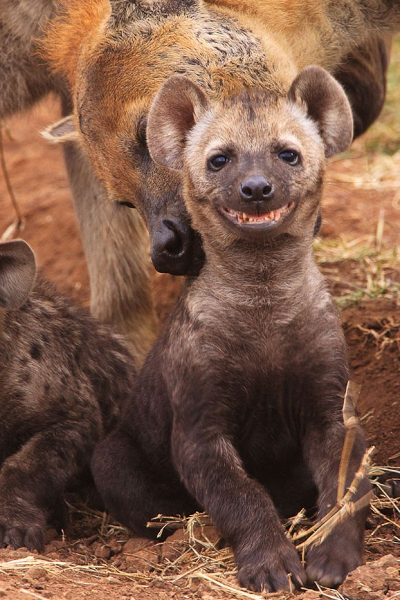 47. животное, улыбка