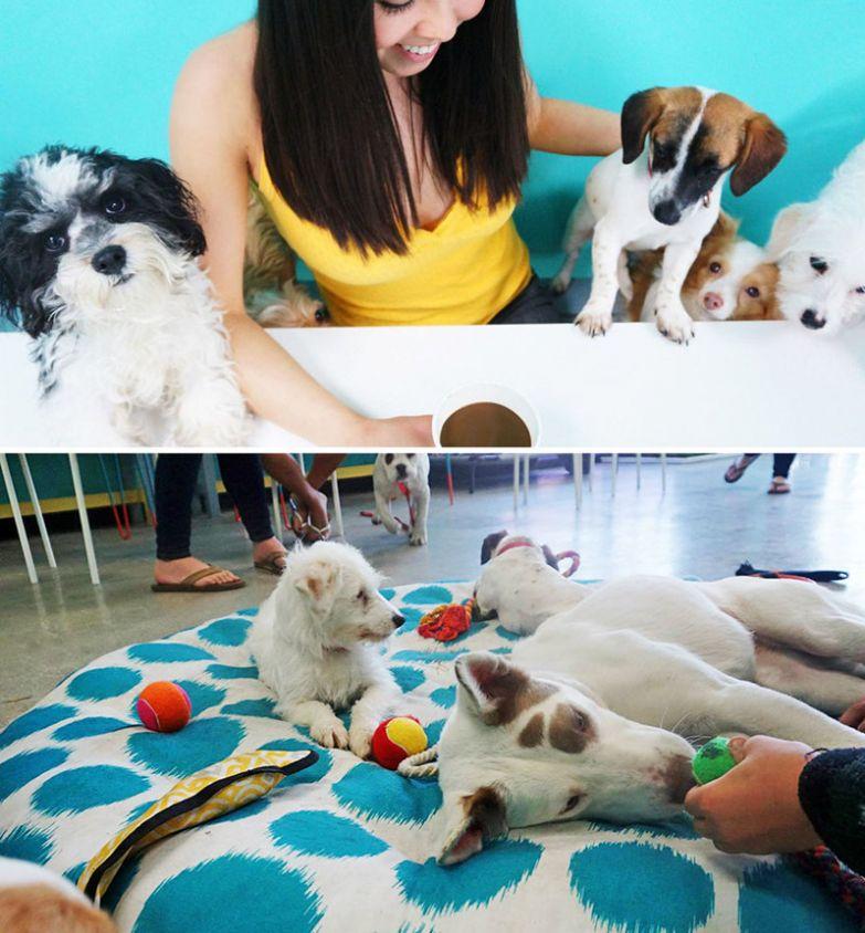 Кафе-приют для собак, где можно найти себе питомца, Dog Cafe, Лос-Анджелес, США мир, подборка, ресторан