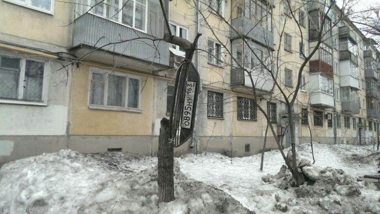 Номера на деревьях - это нормально для данного города прикол, россия, самара, юмор