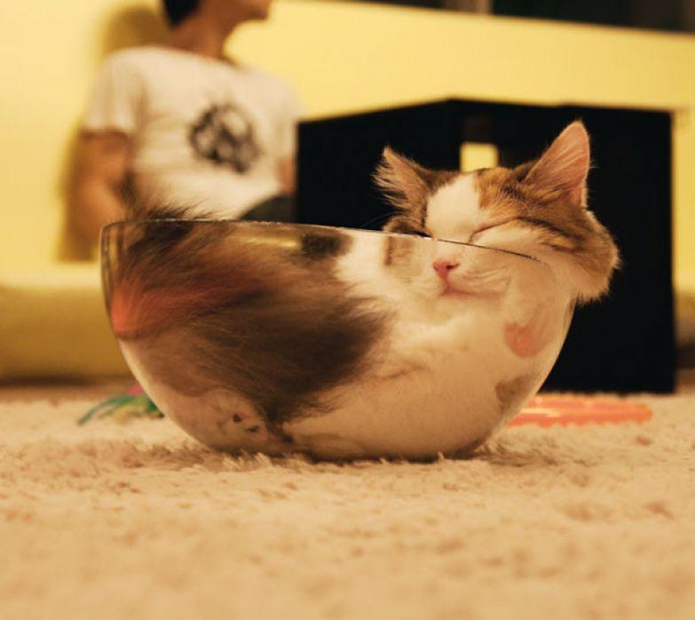 33. После завтрака можно и поспать животные, кошка, сон