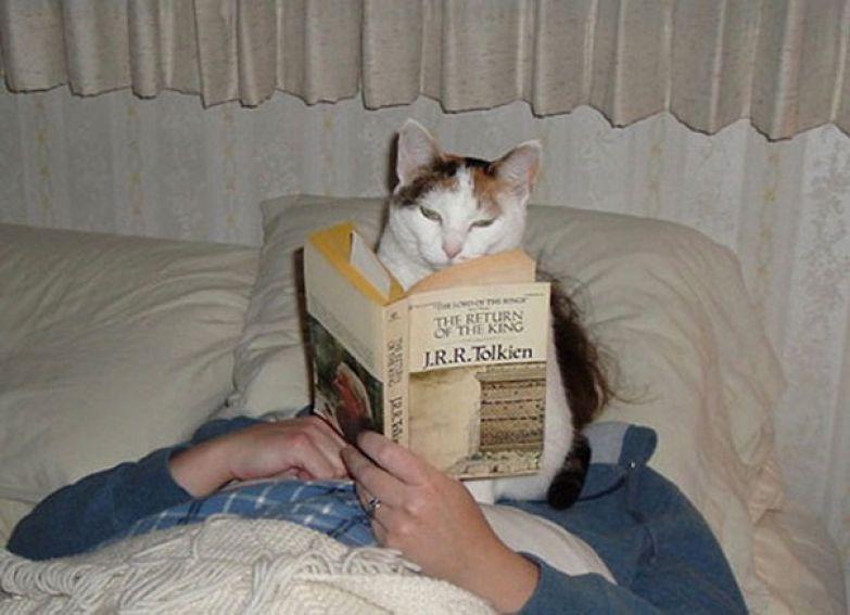 10. Ни один кот не понимает, что такое личное пространство.