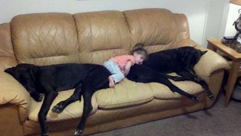 Крупные собаки и дети 8