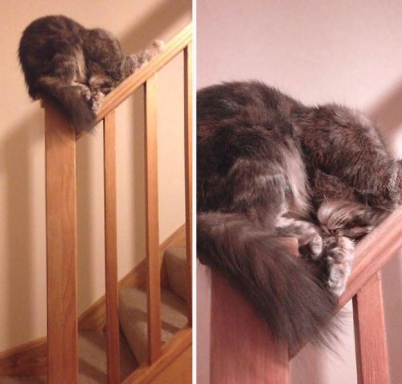 9. Вполне удобное местечко животные, кошка, сон