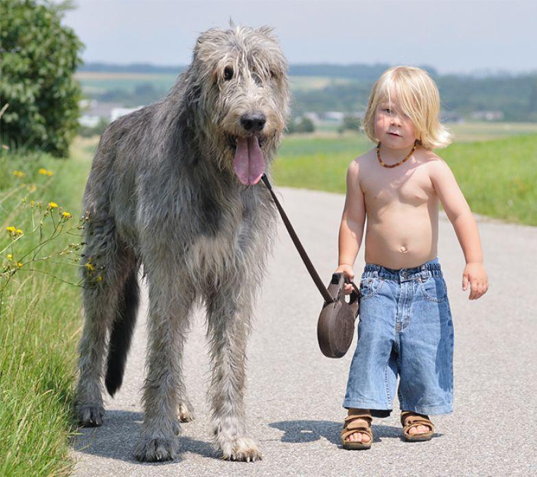 Крупные собаки и дети 11
