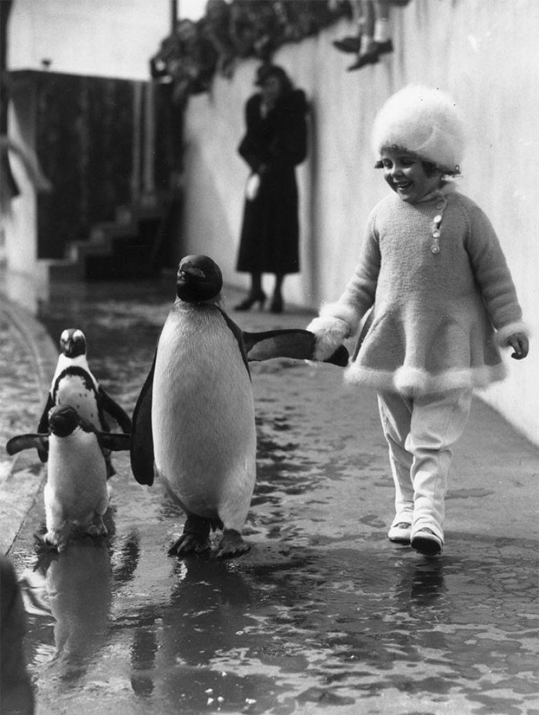 13. Маленькая девочка гуляет рядом с пингвином, держа его за крыло. Лондонский зоопарк, 1937 г. архивные фотографии, лучшие фото, ретрофото, черно-белые снимки