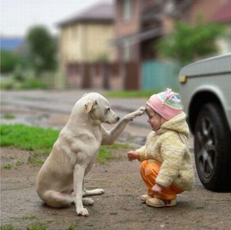 Крупные собаки и дети 2