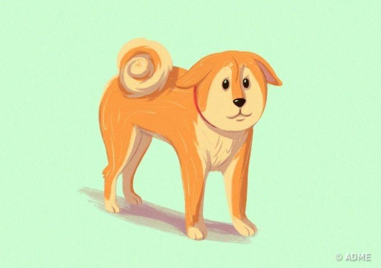 10приемов для тех, кто всегда мечтал понимать собак