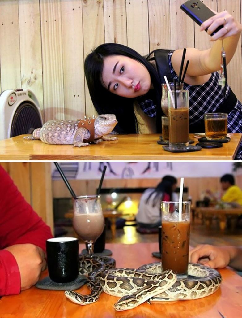 Кафе рептилий, Phu Nhuan's Café Babo, Сайгон, Вьетнам мир, подборка, ресторан