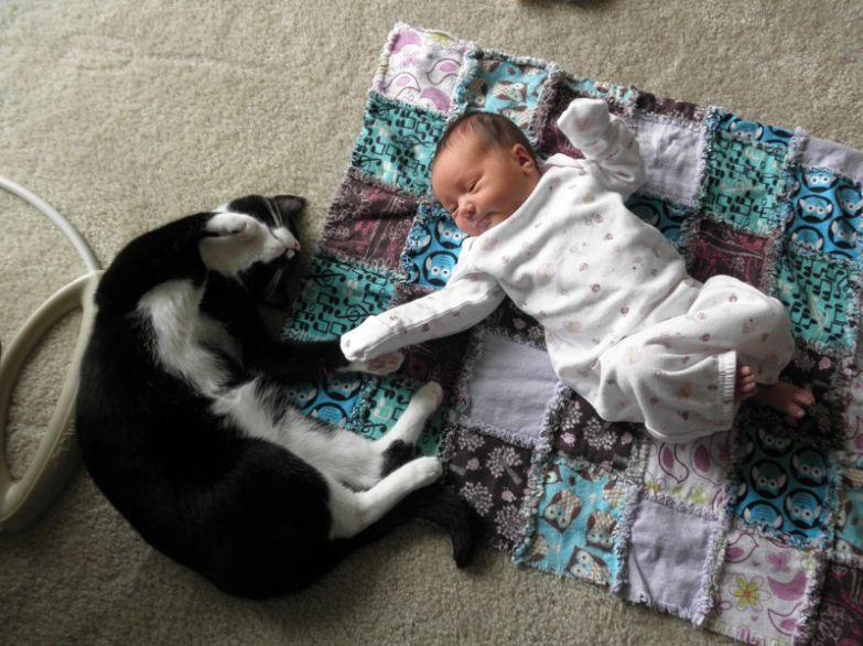 15. Тянутся друг к другу кот, малыш, очарование