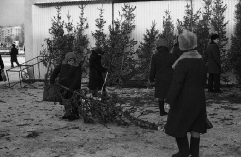 Ёлочный базар. СССР, Новокузнецк, 11 декабря 1982 года.