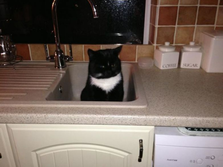So I Walked Into The Kitchen At 5:30am And Saw This In The Sink... This Is Not My Cat..