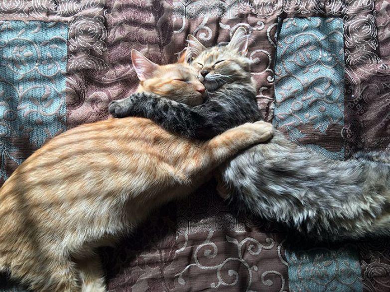 """Джеймс часто получает подобные комментарии: """"Эта фотография сделала мой день!"""" или """"Я плачу, как же это трогательно"""". Любовь, животные, кот"""